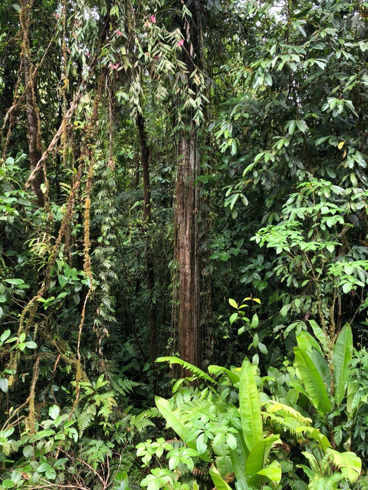 jungle_mario